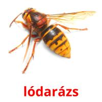 lódarázs picture flashcards