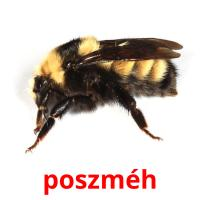 poszméh picture flashcards
