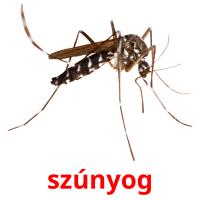 szúnyog picture flashcards