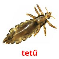tetű picture flashcards