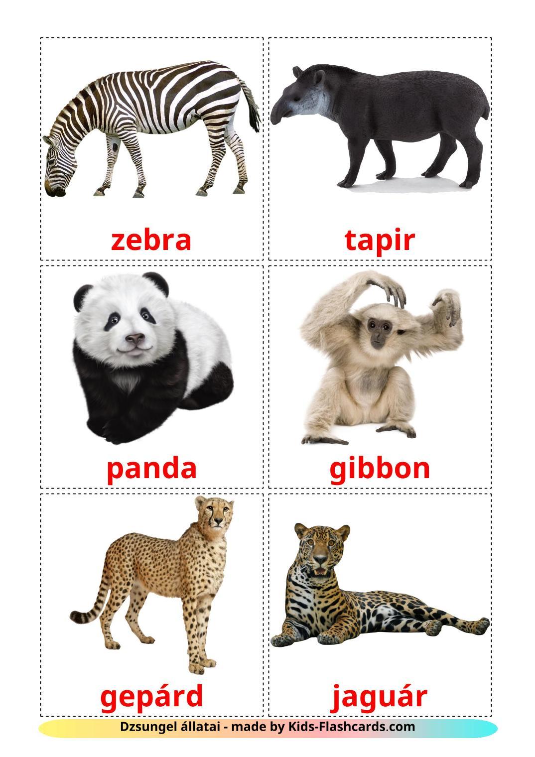 Jungle animals - 21 Free Printable hungarian Flashcards