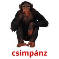 csimpánz picture flashcards