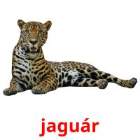 jaguár picture flashcards