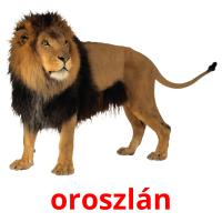 oroszlán picture flashcards