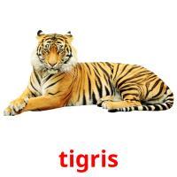 tigris picture flashcards