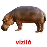 víziló picture flashcards