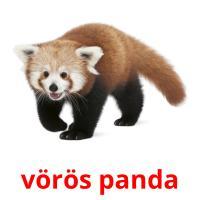 vörös panda picture flashcards