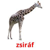 zsiráf picture flashcards