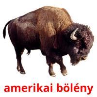 amerikai bölény picture flashcards