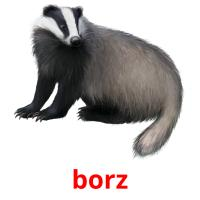 borz picture flashcards