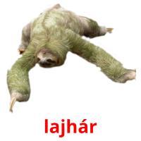 lajhár picture flashcards