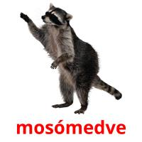 mosómedve picture flashcards
