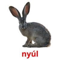 nyúl picture flashcards