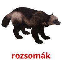 rozsomák picture flashcards