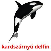 kardszárnyú delfin picture flashcards