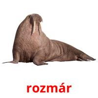 rozmár picture flashcards