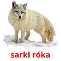 sarki róka picture flashcards
