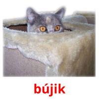 bújik picture flashcards