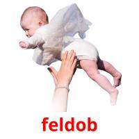 feldob picture flashcards