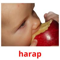 harap picture flashcards