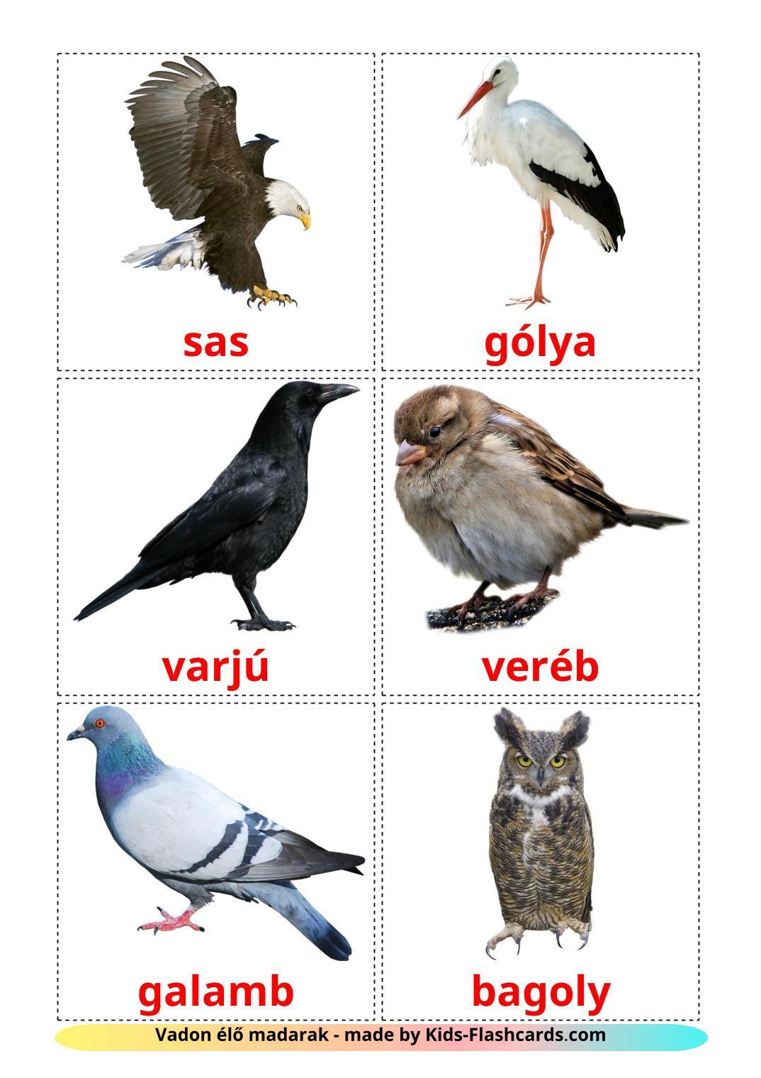 Wild birds - 18 Free Printable hungarian Flashcards