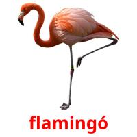 flamingó picture flashcards