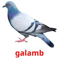 galamb picture flashcards