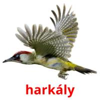 harkály picture flashcards