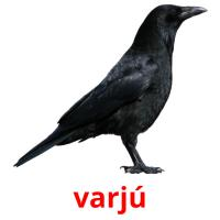 varjú picture flashcards