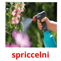 spriccelni picture flashcards