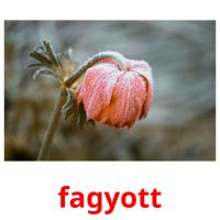 fagyott picture flashcards
