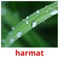 harmat picture flashcards
