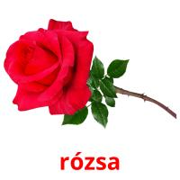 rózsa picture flashcards