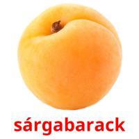 sárgabarack picture flashcards