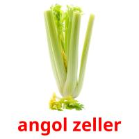angol zeller picture flashcards