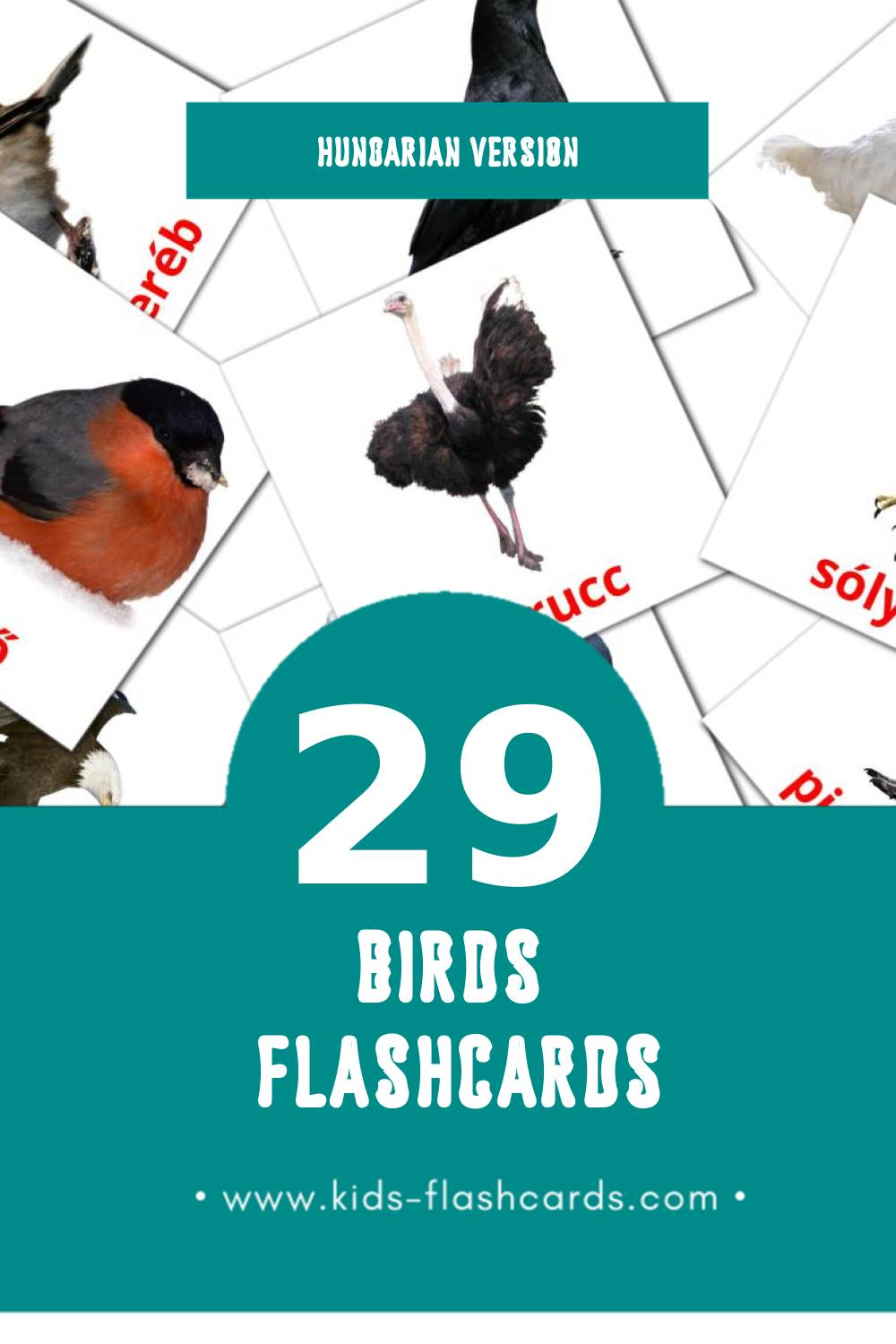Visual Madarak Flashcards for Toddlers (29 cards in Hungarian)