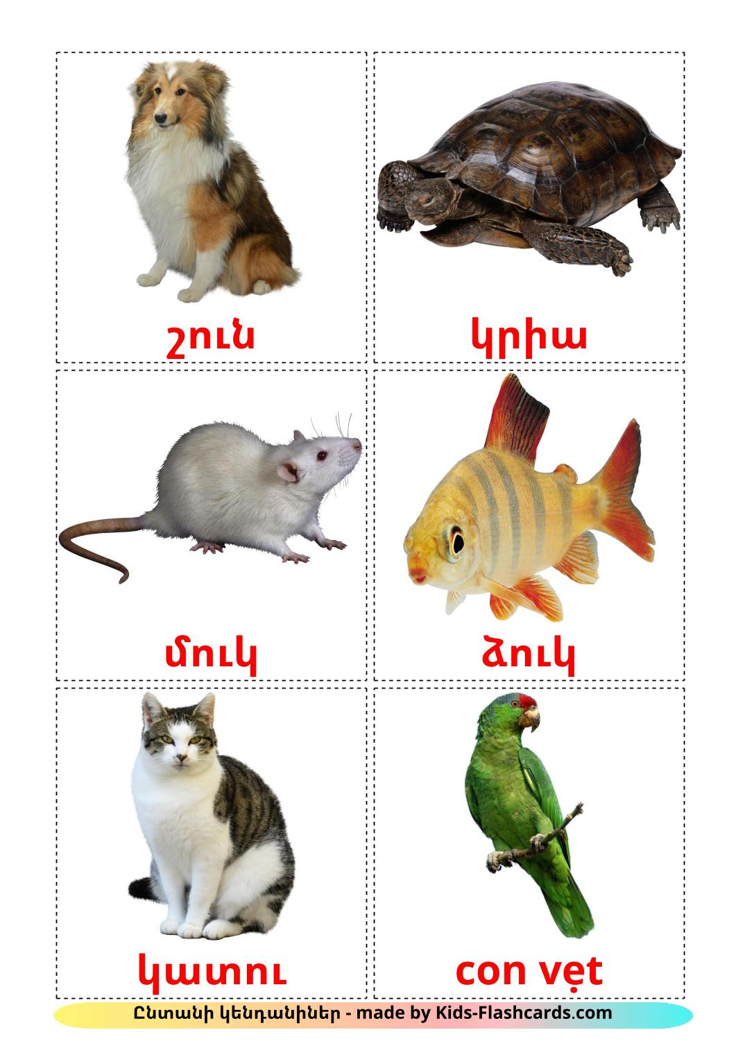 Domestic animals - 10 Free Printable armenian Flashcards