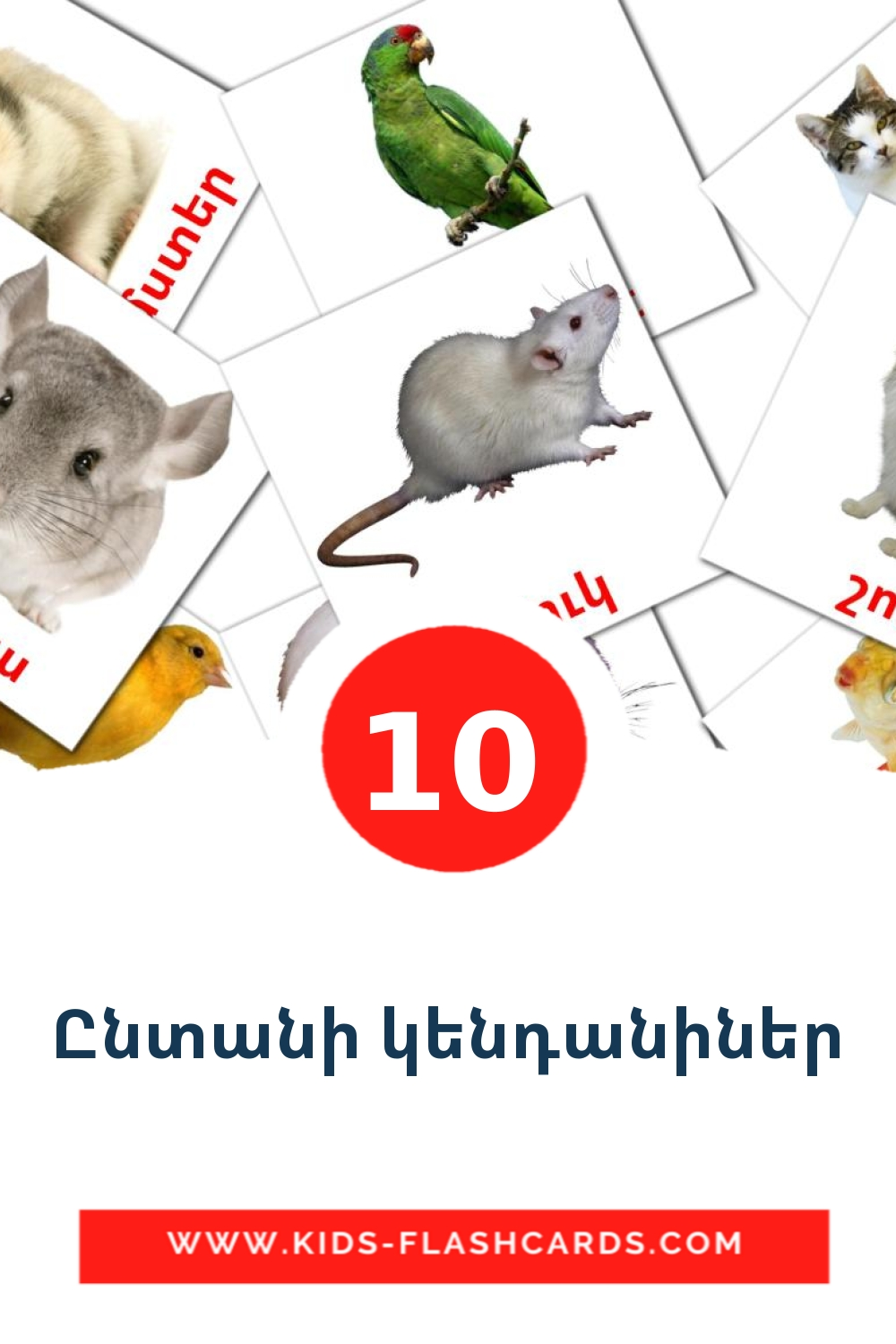 10 Ընտանի կենդանիներ Picture Cards for Kindergarden in armenian