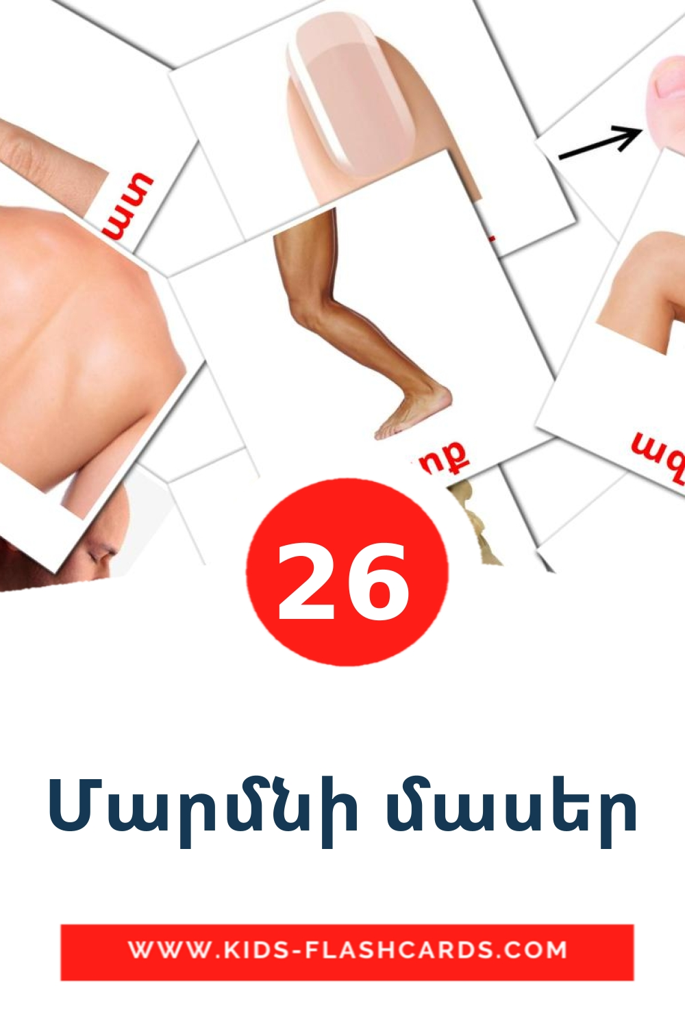 26 Մարմնի մասեր Picture Cards for Kindergarden in armenian