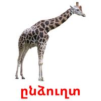 ընձուղտ picture flashcards