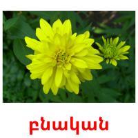 բնական picture flashcards