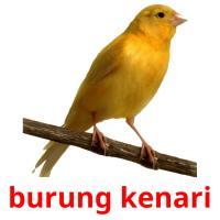 burung kenari picture flashcards