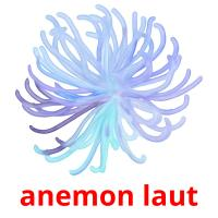 anemon laut picture flashcards