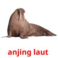 anjing laut  picture flashcards