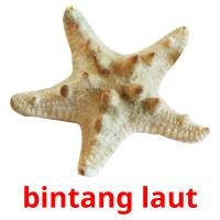 bintang laut picture flashcards