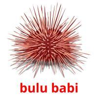 bulu babi picture flashcards