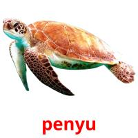 penyu picture flashcards