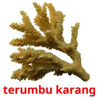 terumbu karang picture flashcards