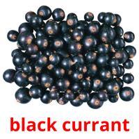 black currant picture flashcards