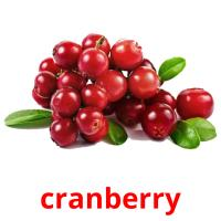 cranberry picture flashcards